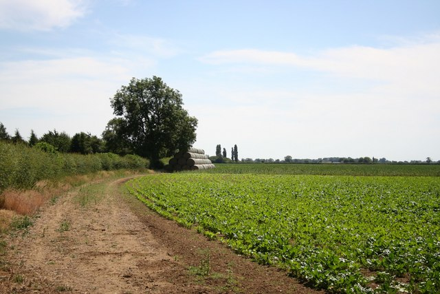 Farmland near Low farm