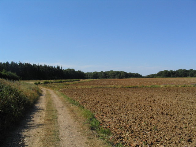 View north along edge of Dobbin's Wood