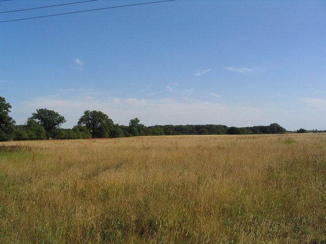 View south across hay field towards Dog Kennel Wood
