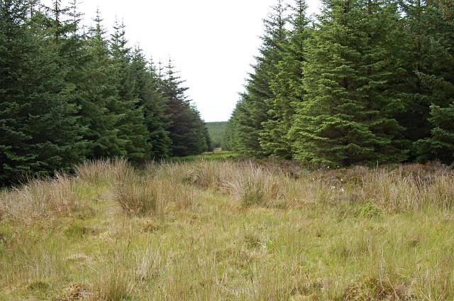 Loch Garbh forest