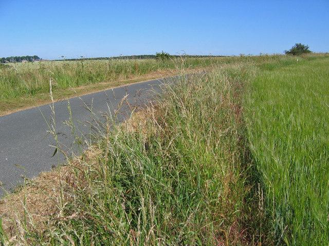 Road  Through Farmland