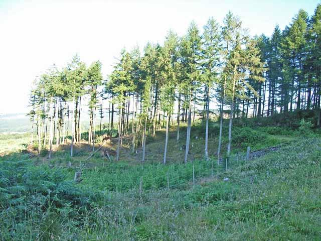 Plantation east of Low Dale Park
