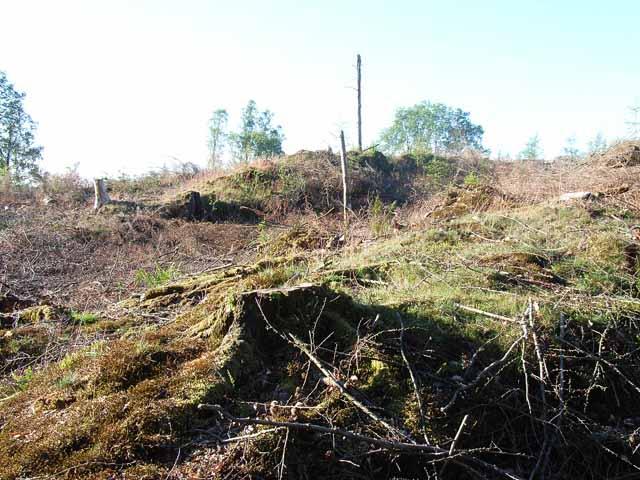 Clear felling near Graythwaite
