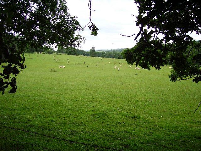 Pasture, Hopton Wafers