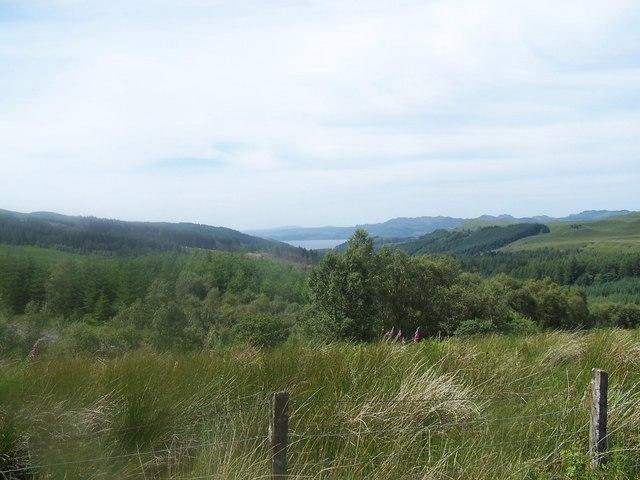Glendaruel, Forests