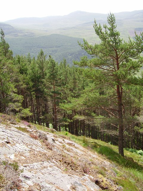 Achlorachan Wood