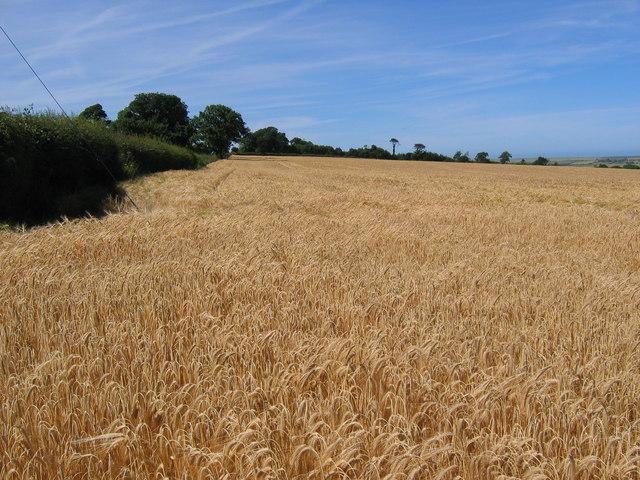 Farmland South of Hunmanby