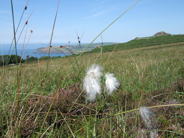 View from Pont Ceunant, with cotton grass