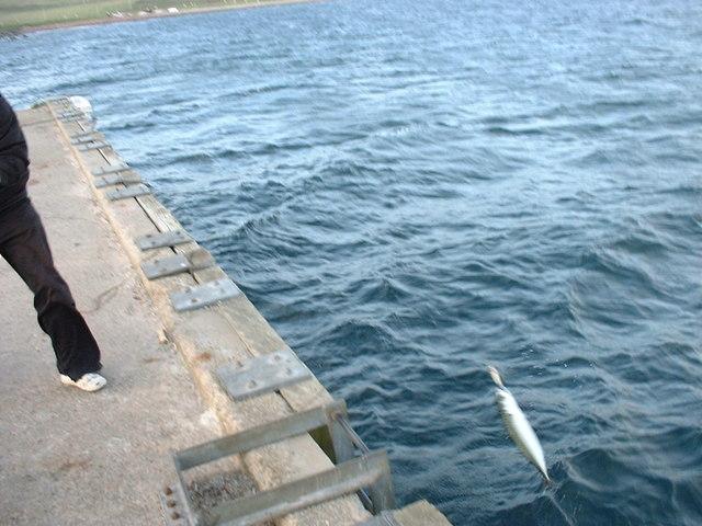 Landing Mackerel at Badentarbat Pier