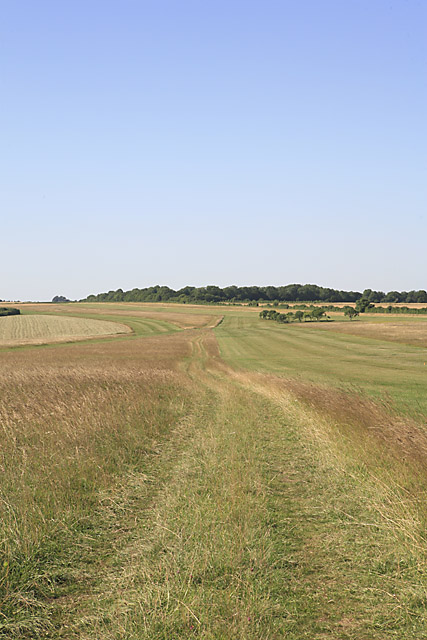 Footpath parallel to gallops on Whitsbury Down
