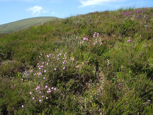 Heather on the lower slopes