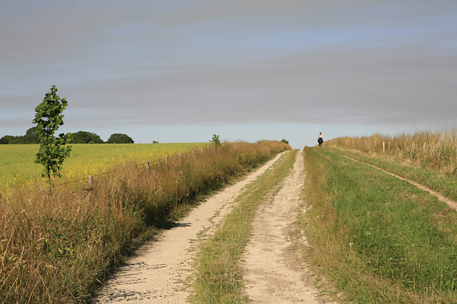 Private track on Whitsbury Down, south of Round Clump