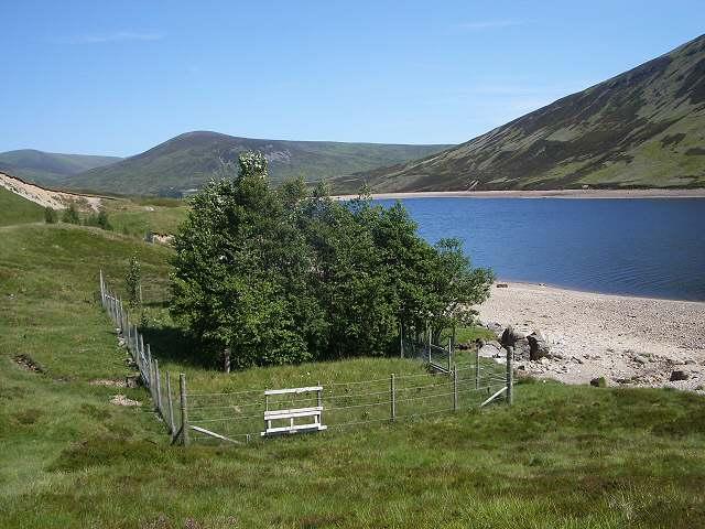 Plantation by Loch Garry