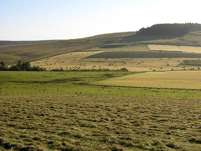 Fields by Hareshaw Burn