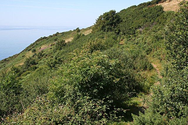 The Coastal Slope