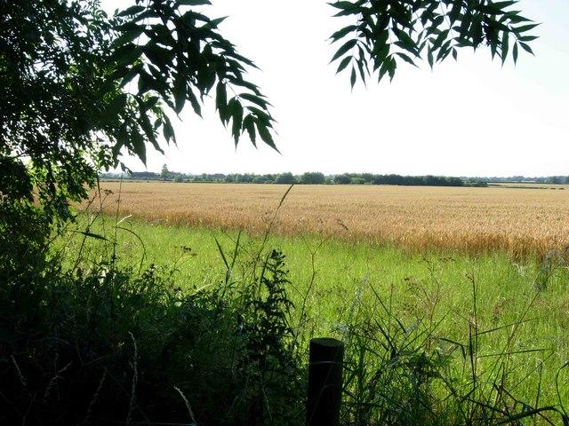 Farmland near Wolvey