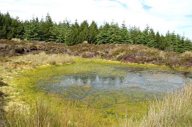 Bog hole near Loch Dhu