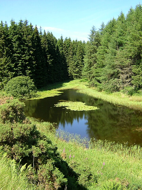 Pond in Kielder Forest