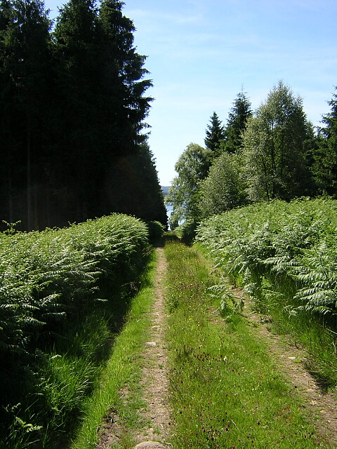 Track in Kielder Forest