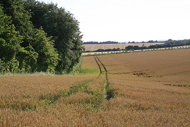 Looking along northern edge of Long Plantation, Whitsbury Down