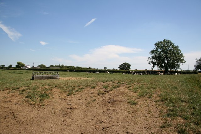 Cattle grazing near Woods Farm