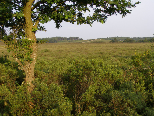 Dibden Bottom, New Forest