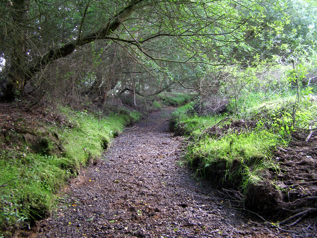 Dry streambed at Rushbush, New Forest
