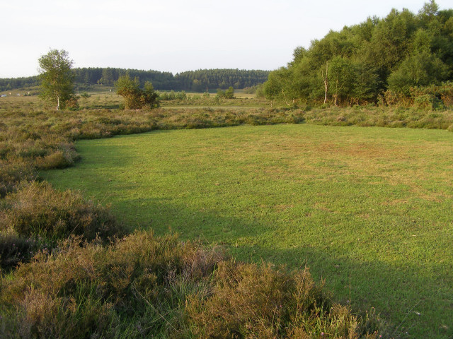 Dry pond at Rushbush Pond, New Forest