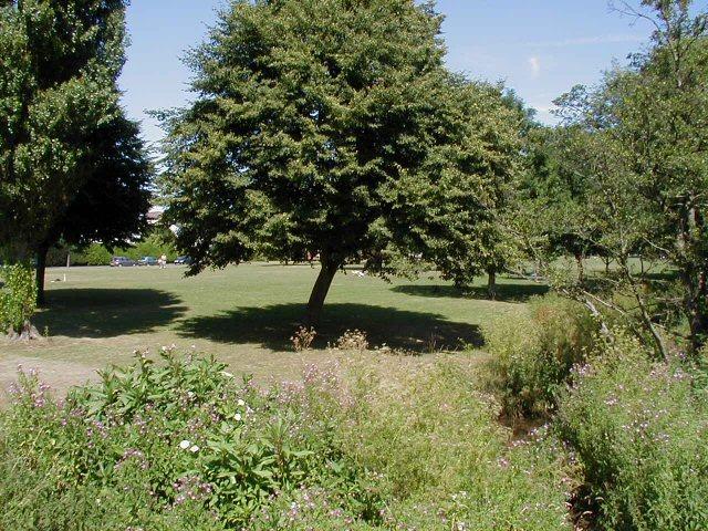 Pleasant parkland opposite Timberhonger Lane