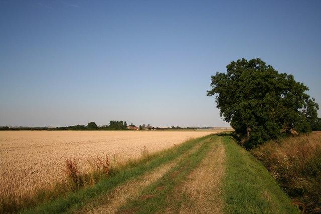 Towards Till Bridge Farm