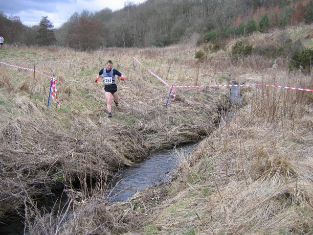 Runner in wooded valley