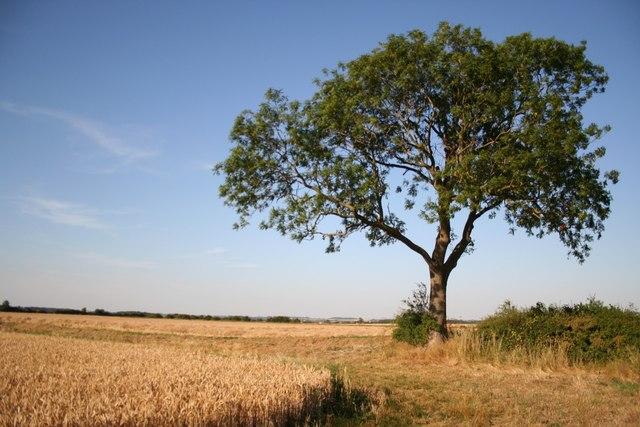 Farmland near Thorpe-le-Fallows