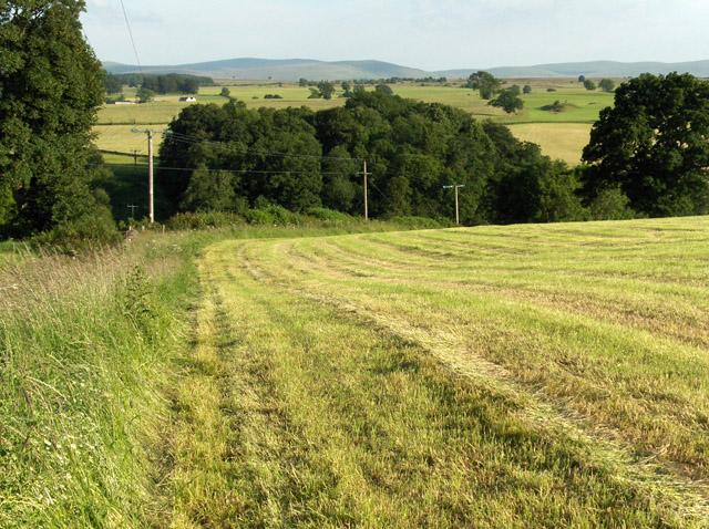 Hay-meadow above Bishop's Bridge