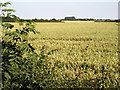 TA2633 : Farmland View from Longbrough Lane by Andy Beecroft
