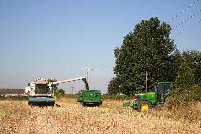 Oil seed rape harvest