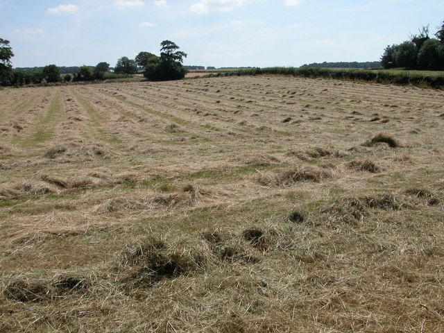 Haymaking in Ringstead
