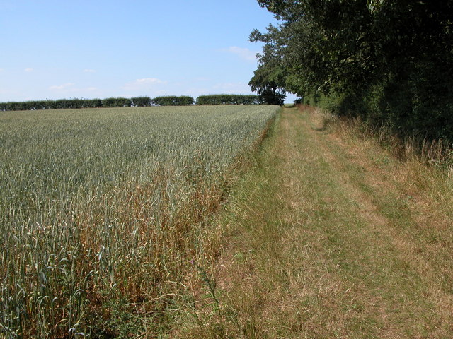 Footpath along side North Wood