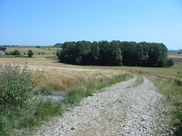The northernmost bridlepath from Great Edstone to Marton