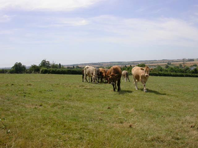 View from the Milton Keynes Boundary Walk