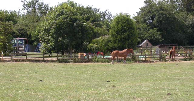 Horses near Children's Play Area