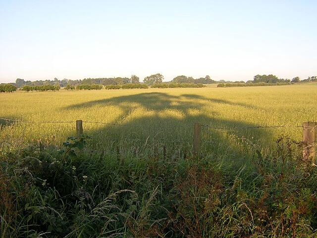Field Near Thorneyford