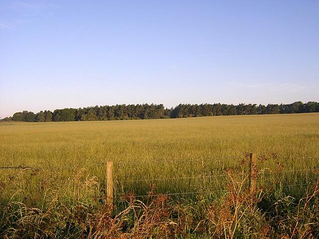Field And Wood Near Thorneyford