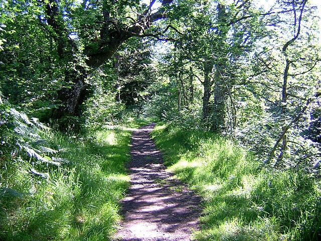 Shady Forest Walk Near Kielder Castle