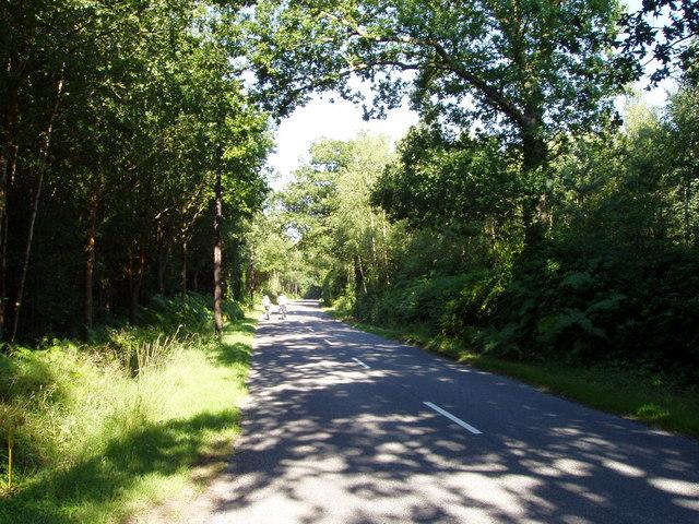 Lane across Duncton Common