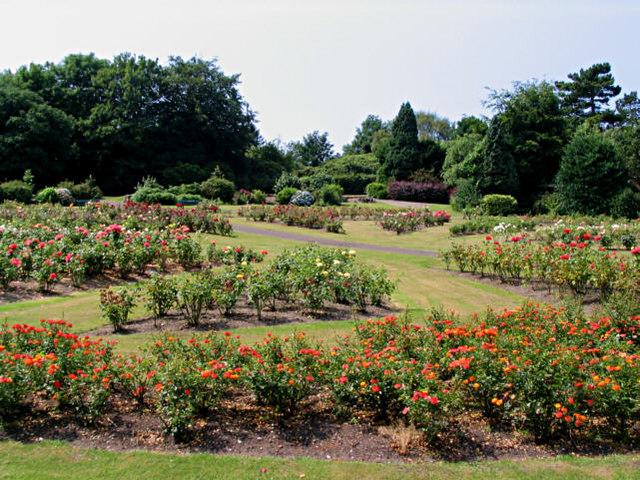 Rose Garden at the Arno
