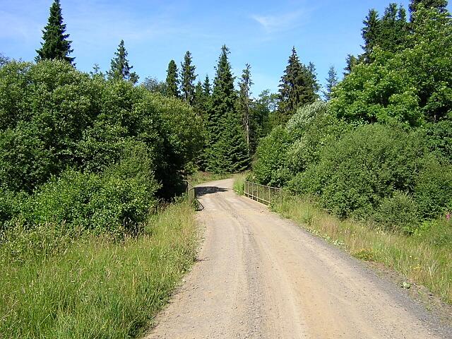 Track in Kielder Forest