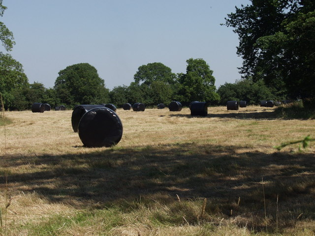 Haylage bales ready  to be stored