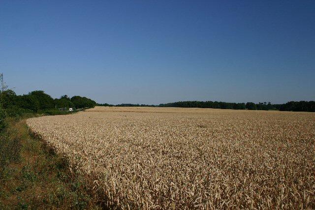 Black Hill, Troston