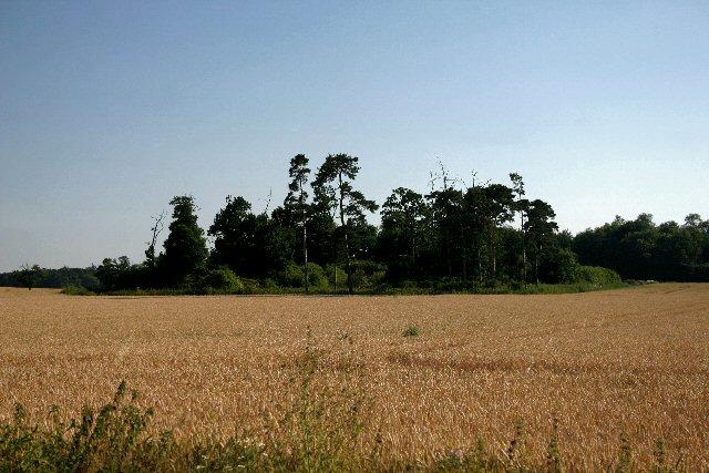 Field at Troston