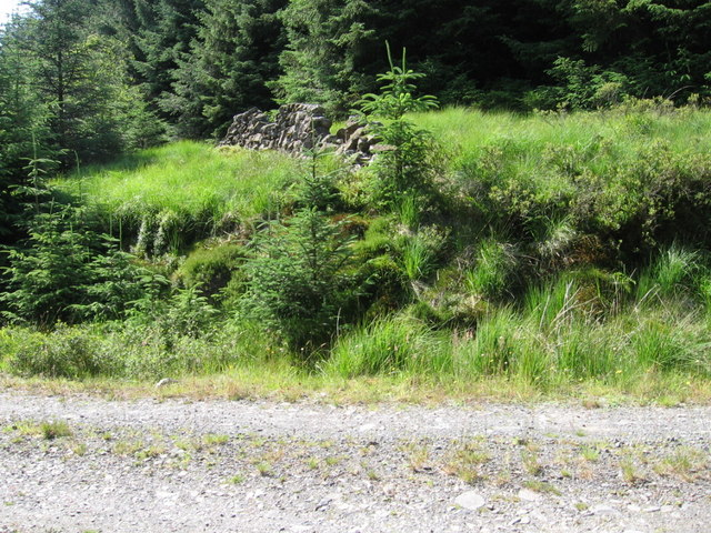 An old enclosure wall from the forest track